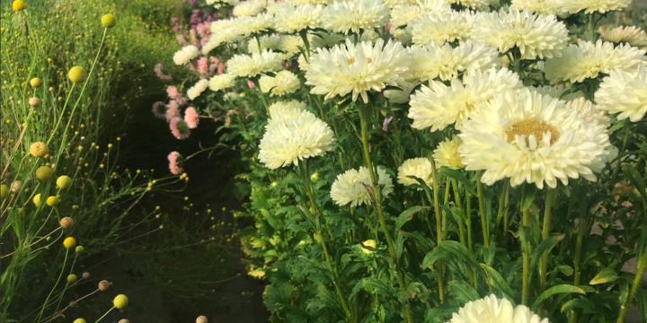 Fleurs coupées – Florie Jehanne